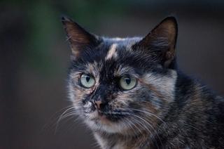 IBC_cat_1.JPG
