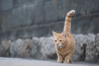 IBC_cat_2.JPG